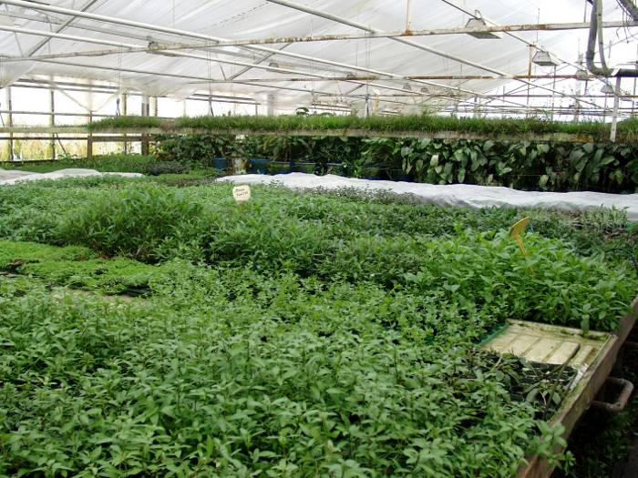Photo from Aquartica plant nursery Denmark