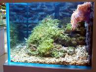 Click to see large image: Saltwater tank