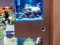 Click to see large image: Saltwater tanks